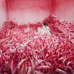 Photographs by Jee Young Lee